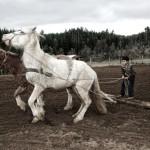 Mapuche DSC_5662_